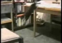 View Probably the Funniest Cat Video You'll Ever See