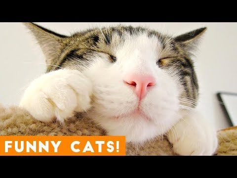 View Funniest Cat Compilation September 2018   Funny Pet Videos