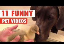 View 11 Funny Pet Videos Compilation 2016