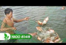 Xem Khởi nghiệp số 139 : Cho cá ăn đúng cách – bí quyết làm giàu đơn giản