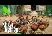 """Xem """"Lột xác"""" chuồng nuôi gà: Không có việc gì khó, chỉ sợ lòng không bền – Khởi nghiệp 394"""