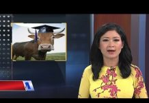 """11/9/2018 I Chương trình """"công nghệ giáo dục"""" và câu chuyện khi con bò cũng trở thành """"tiến sỹ"""""""