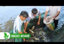 Xem Khởi nghiệp 121: Những bí quyết nuôi cá truyền thống hiệu quả nhất