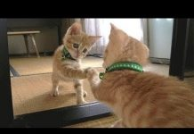 View Animals in Mirrors – Funny Animals Reactions to Mirrors