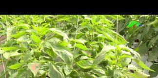 Ứng dụng công nghệ thông mới thông minh trong nông nghiệp   LTV