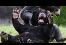 View Wild animals can be even funnier than pets – Funny wild animals compilation