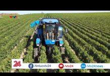 Công nghệ thu hoạch nho và sản xuất rượu vang của nông dân Bỉ| VTV24