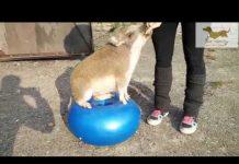 Xem Chó và mèo nhảy theo nhạc remix thiếu nhi cực chất   Pet Music