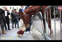 View FUNNY HORSES ★ Funny Horse Videos [Funny Pets]