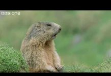 """View Funny Talking Animals: """"Alan"""" – Walk On The Wild Side Preview – BBC One"""