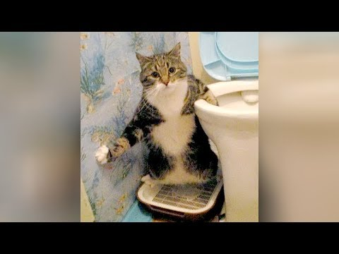 View WEIRD CATS will make you CRY WITH LAUGHTER! – Super FUNNY CATS