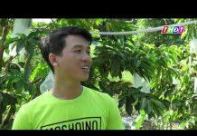Xem Chàng trai 8X khởi nghiệp từ cây Mãng cầu xiêm   THDT
