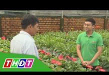 Ưu điểm ứng dụng mô hình công nghệ cao trong sản xuất hoa kiểng | Kiến thức nông nghiệp | THDT