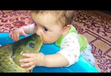 View BABIES MEET FISH FOR THE FIRST TIME | Funny Babies And Animals Videos Compilation