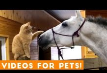 View Funniest Videos for Pets to Watch Compilation | Funny Pet Videos