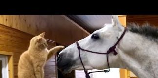 View Funniest Videos for Pets to Watch Compilation   Funny Pet Videos