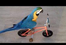 View Funny Parrots Doing Funny Stuff – Cutest Parrots Compilation 2018