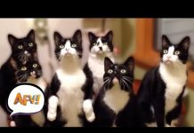 View Top 50 Funny Cat Videos | AFV Funniest Videos 2018
