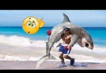 View Funny Animals And People – Funniest Animals And People – Fails Compilation