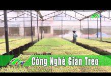 """[Nông Nghiệp]Lâm Đồng """"lên đời"""" nhờ … công nghệ giàn treo   Lâm Đồng   LDTV"""