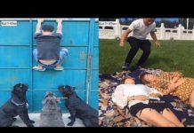 Xem Xem là cười P114 – Top clip hài hước và bá đạo nhất 2018 / Funny videos P114 – Try not to laugh