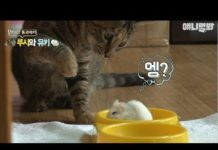 Xem Cat Beat Up By Hamster: Tom and Jerry IRL