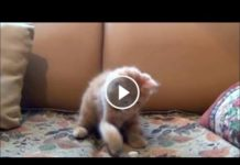 View funny cat