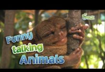 View Funny Talking Animals