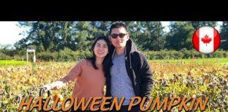 🎃Thăm vườn Bí Đỏ Halloween Pumpkin tại Canada   Du Lịch Vancouver   Quang Lê TV #147