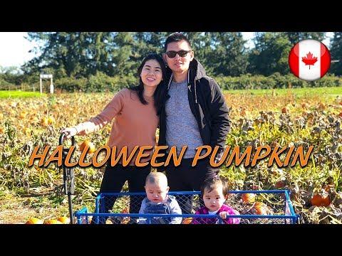 🎃Thăm vườn Bí Đỏ Halloween Pumpkin tại Canada | Du Lịch Vancouver | Quang Lê TV #147