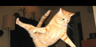 View Funny Cats – A Funny Cat Videos Compilation 2015
