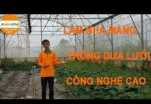 Hướng dẫn làm nhà màng trồng dưa lưới công nghệ cao