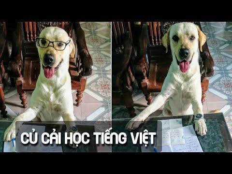 Thật bất ngờ khi Củ Cải học tiếng Việt theo công nghệ giáo dục