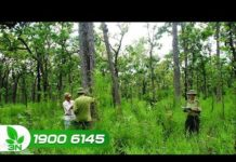 Đột phá từ ứng dụng công nghệ quản lý rừng tại Việt Nam