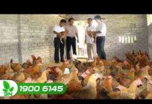 Chăn nuôi gà an toàn nhờ ứng dụng công nghệ vi sinh I VTC16