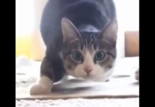 View Funny Cats Vine Compilation September 2015