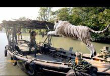 Xem Phim Chúa Tể Núi Rừng – Phim Hành Động Phiêu Lưu Kịch Tính – Full HD Vietsub