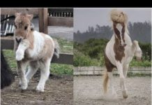 View ♥Cute horse Doing Funny Things 2018♥ #05 – Soo cute!