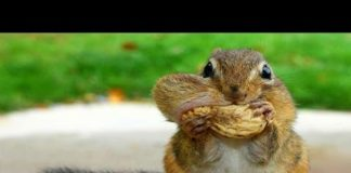 View 10 Funniest Squirrel Videos
