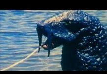 Xem IT CAME FROM THE LAKE | Monster | John Carradine | Full Length Monster Sci-Fi Movie | English