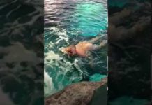 Xem Degenerate takes a dip in shark tank at Ripley's Aquarium
