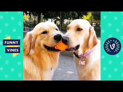View TRY NOT TO LAUGH – Funny Pets & Animals | Funny Videos November 2018