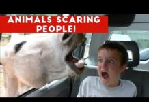 View Funniest Animals Scaring People Reactions of 2018 Weekly Compilation | Funny Pet Videos