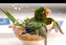 View Funny Parrots – A Funny Parrot Videos Compilation 2015