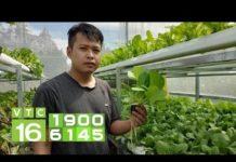 Xem Kỹ sư về quê, khởi nghiệp trồng rau thủy canh I VTC16