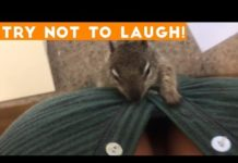 View TOP 100 FUNNY ANIMALS of 2018 | Try Not To Laugh Challenge March / April | Funniest Pet Videos