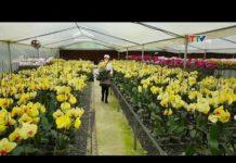 Bước phát triển đột phá của Nông nghiệp công nghệ cao  ở Thanh Hóa