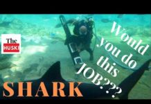 Xem Would you do this Job for 1 Million Dollars? – Shark Tank