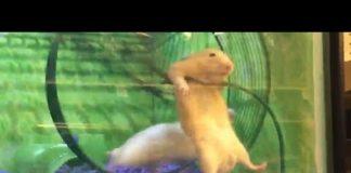 Xem Thách bạn nhịn cười trong 1 phút với động vật hài hước – Try Not To Laugh Funny Animal Compilation