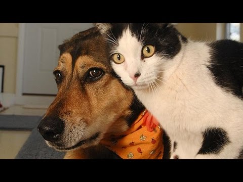 View Funny Cats and Dogs Compilation
